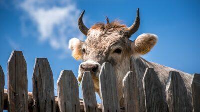 vaca sinopsis La madre de todas las ciencias