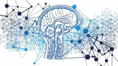 Inmemorian - cerebro
