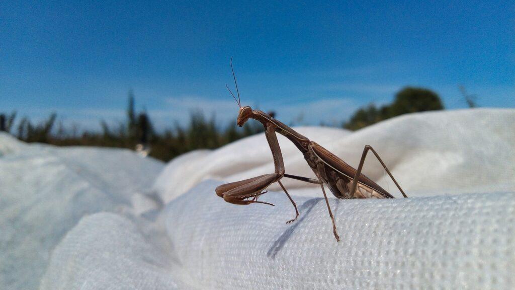 agnes javier peña mantis religiosa